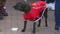 Man United dog